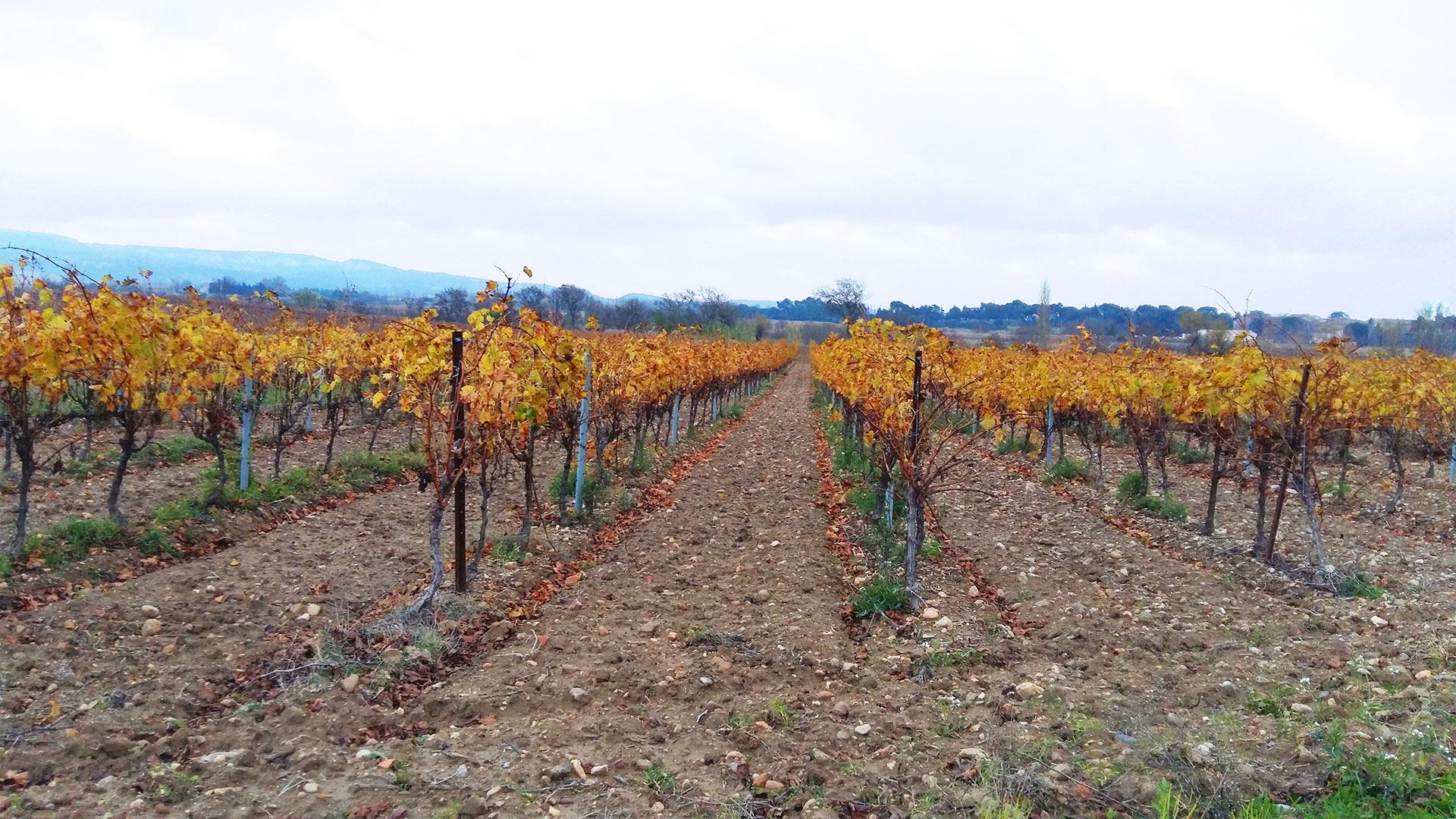 Ciam mat riel agricole viticole espaces verts btp for Espace vert beziers